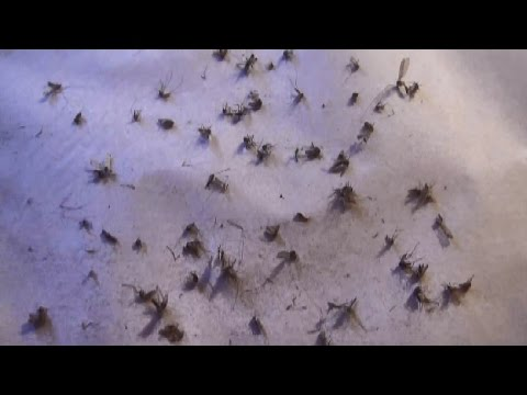 trap and remove from your home easy and no chemicals