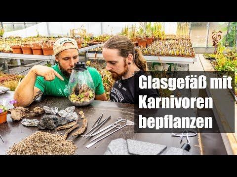 #55-aquaowner-zu-besuch-bei-green-jaws-|-terrascaping-mit-karnivoren