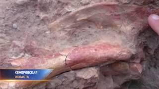 Найдено древнейшее млекопитающее
