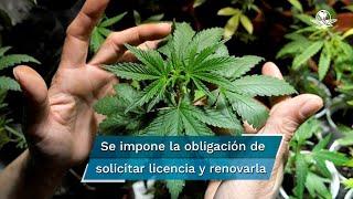 Los diputados federales decidieron hacerle una cirugía mayor a la minuta que aprobaron los senadores en noviembre pasado, y se eliminó la creación del Instituto Mexicano para la Regulación del Cannabis