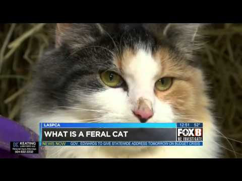 Feral Cats in New Orleans