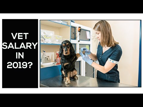 Veterinarian Salary In USA 2019