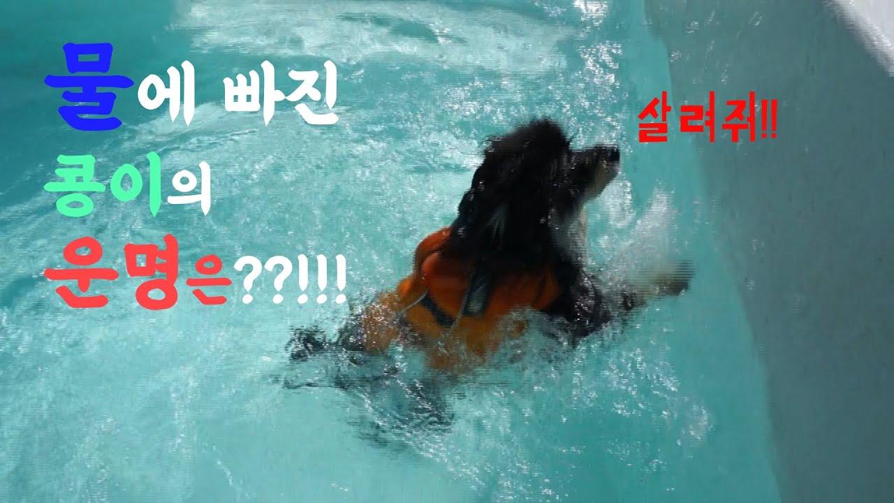 물에 빠진 강아지의 운명은? (The fate of the drowning dog?)
