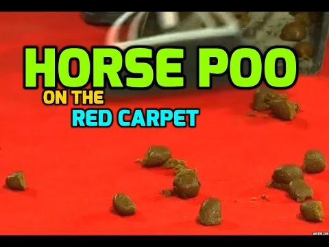 The Magnificent Seven: horses poo on the red carpet in Venice!