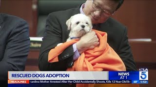 Rescued Dogs up for Adoption in O.C.