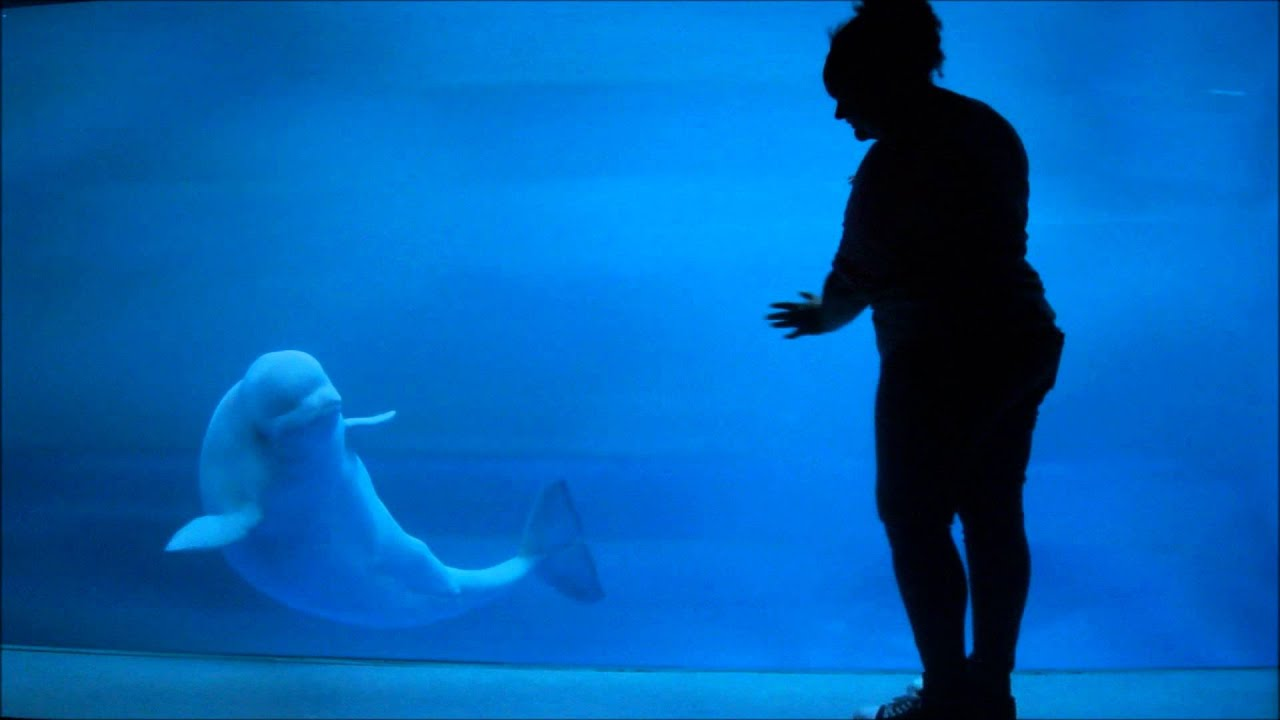 Beluga whale poker characteristics of blackjack