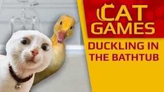 CAT GAMES - 🦆 Duckling in the Bathtub! (Videos for Cats to watch) 2 Hours 4K