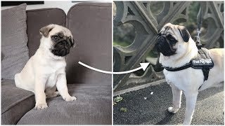 Pablo from 3 Weeks to 1 year old!