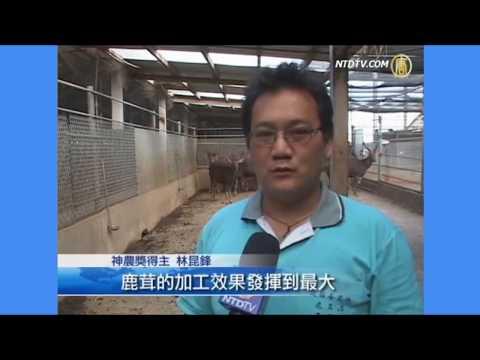 2018台灣鹿簡介