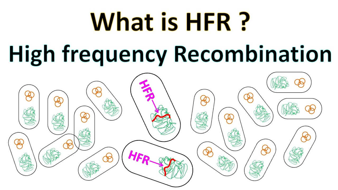 Download HFR | High Frequency Recombination