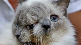 В США умер старейший в мире кот с двумя мордами