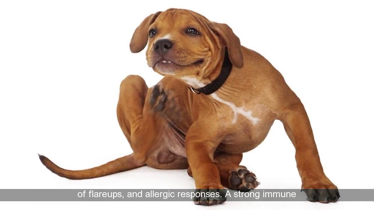 Natural Remedies For Atopic Dermatitis In Dogs