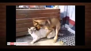 Лучшее видео-ролики про животных 5