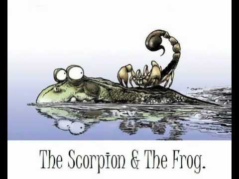 Image result for the scorpion and the frog