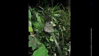Butterfly Garden - Victoria, BC