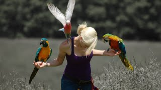 adventures-free-flying-parrots-utah-virginia