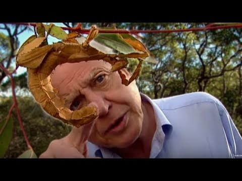Life of Insects - Attenborough: Life in the Undergrowth - BBC