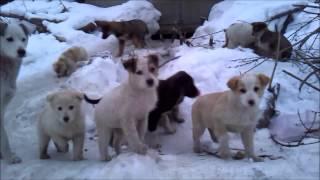 Собаки Бездомные щенки 31 декабря 2014 года