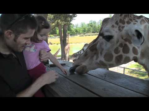 Thumbnail: Feeding the Giraffes; Richmond, Virginia