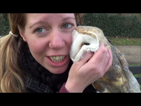 Going on a bike ride with my barn owl