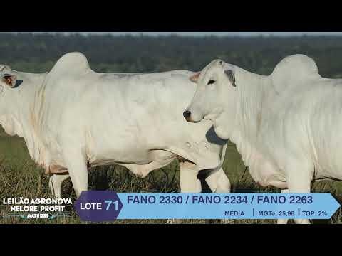 LOTE 71 FANO 2330 X 2263 X 2234
