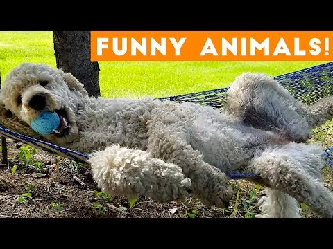 Funniest Pets & Animals of the Week Compilation November 2018   Funny Pet Videos