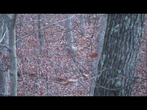 Ohio Public Land Bow Hunt 2015