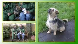 Hundevermittlung - Mai/juni 2013   Tierheimtv Hannover