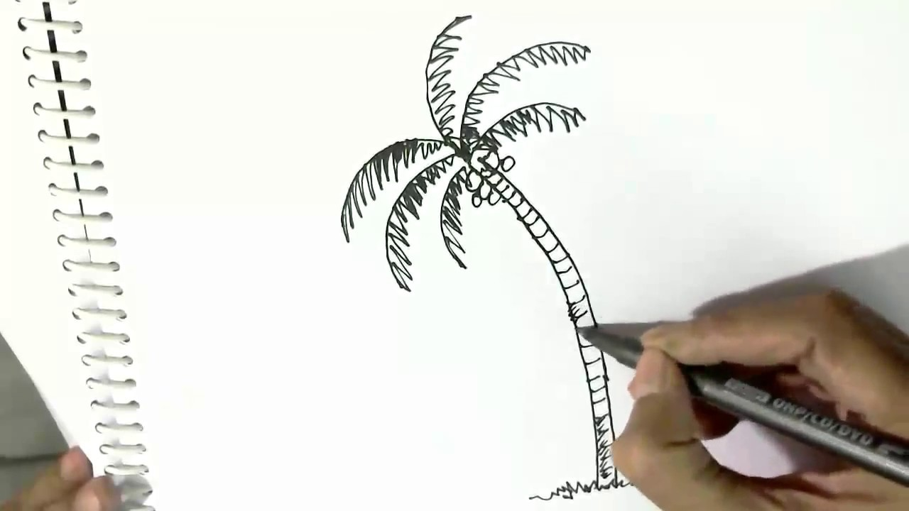 How To Draw A Palm Or Coconut Tree In Easy Steps For Children Kids Beginners Youtube