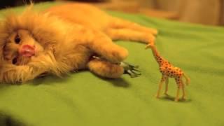 Львиная грива для кошки (Шапка Лев для кота)