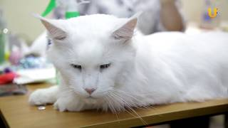 Глазами животных, выпуск 277 («Удачный кот» - порадовал жителей и гостей Уфы, часть 1)