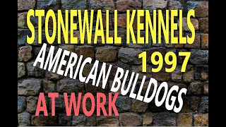 STONEWALL KENNELS   American Bulldog retro video (part 1)
