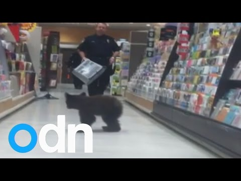 Cute: Baby bear wanders into US drug store
