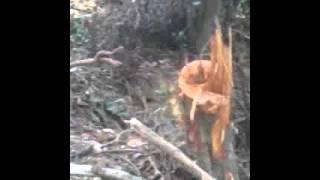 Download Video Tarzan xxx MP3 3GP MP4
