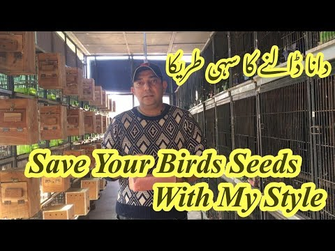 How To Save Bird Seeds With My Style||How To Feed A Birds[hindi/urdu]
