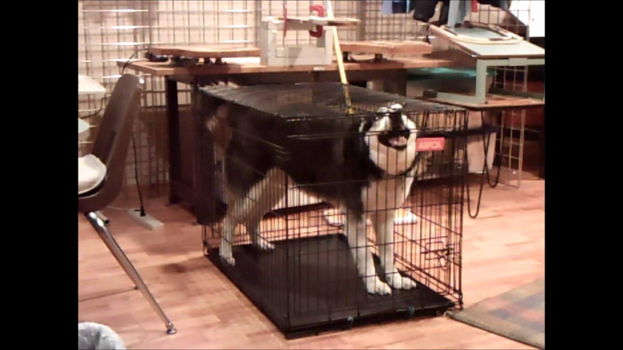 Toy Dog Kennel