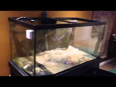 How To Move A Coral Reef Fish Tank