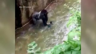 Baby Falls Into Zoo