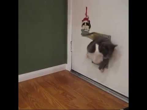 Кот пролезает под дверью