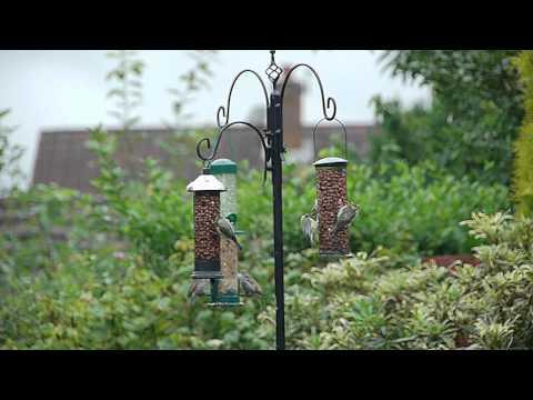 My Garden Wildlife Birds Which Have Graced My Bird Feeder