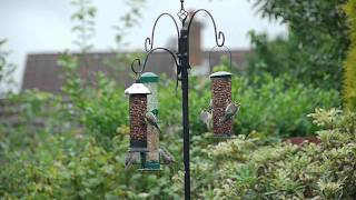 My Garden Wildlife - Birds Which Have Graced My Bird Feeder Throughout The Year
