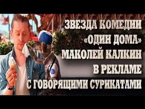 Звезда комедии «Один дома» Маколей Калкин в рекламе с говорящими сурикатами.