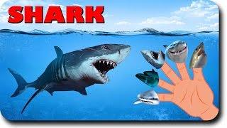 SHARK FINGER FAMILY ANIMALS   CHILDREN SONG
