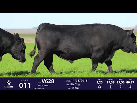 LOTE 11 - TAT V530 e TAT V628