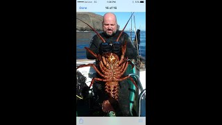 California lobster season coming to a end