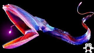 Top 10 Most Bizarre Deep Sea Creatures Ever Discovered