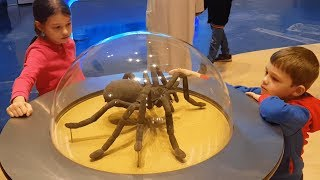 Children's museum. Video Compilation from KIDS TOYS CHANNEL