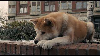 Самые знаменитые собаки из мультфильмов и кино ч. 1/The most famous dogs in cartoons and films p. 1