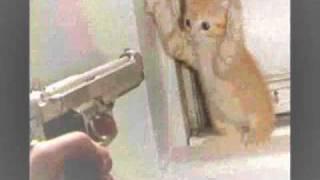 Kill a Kitten-Stephen Lynch