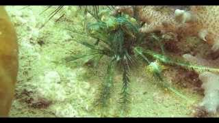 Дайвинг на Самуи. Под водой живут инопланетяне =)(, 2013-10-16T07:26:26.000Z)